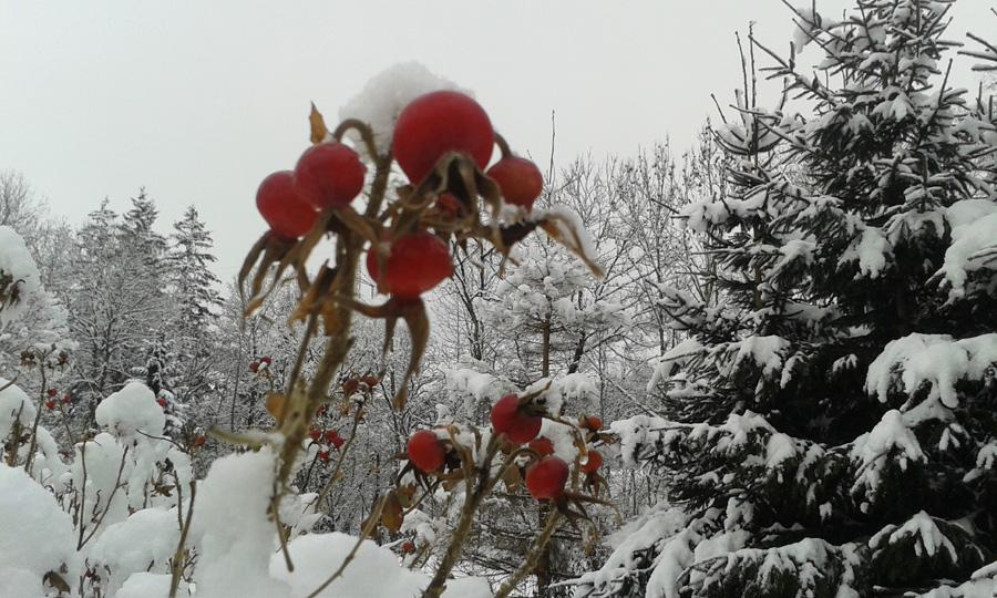 Winter 900